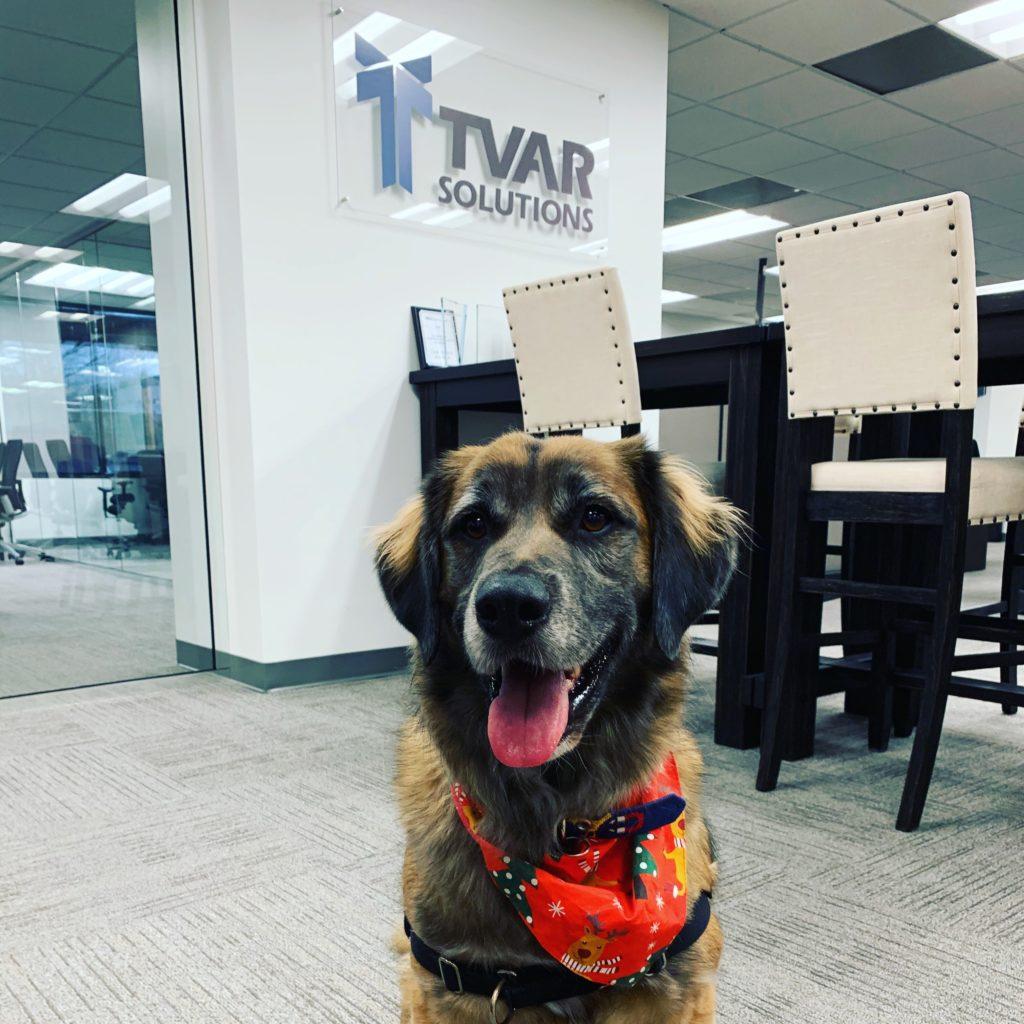 """TGIF!"" - Bandit the office dog"
