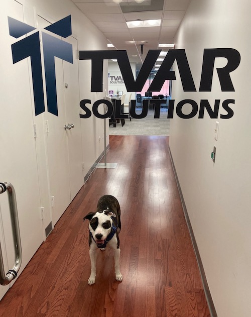 Olive the Office Dog at TVAR Solutions